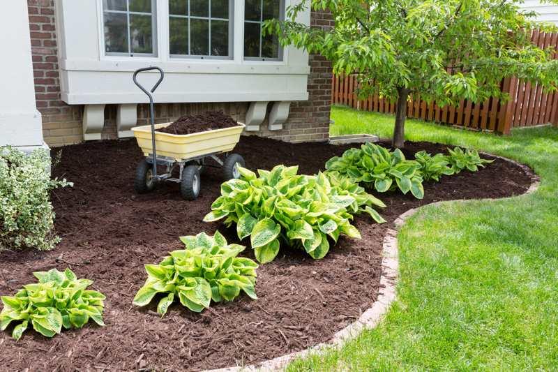 garden services - Toms Lawn And Garden