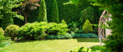 toms-landscaping-services (7)